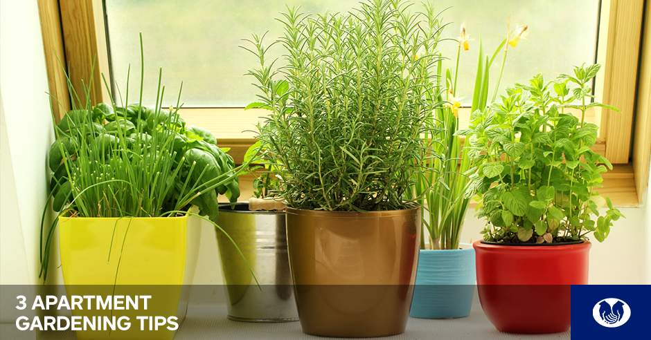 Apartment Gardening: 3 Ways to Bring In the Outdoors