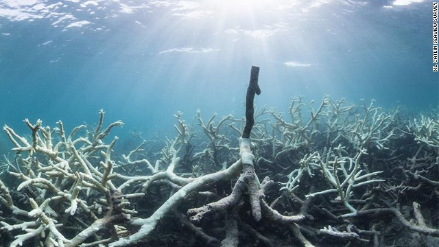 Study: Over 90% of Great Barrier Reef suffering from coral bleaching