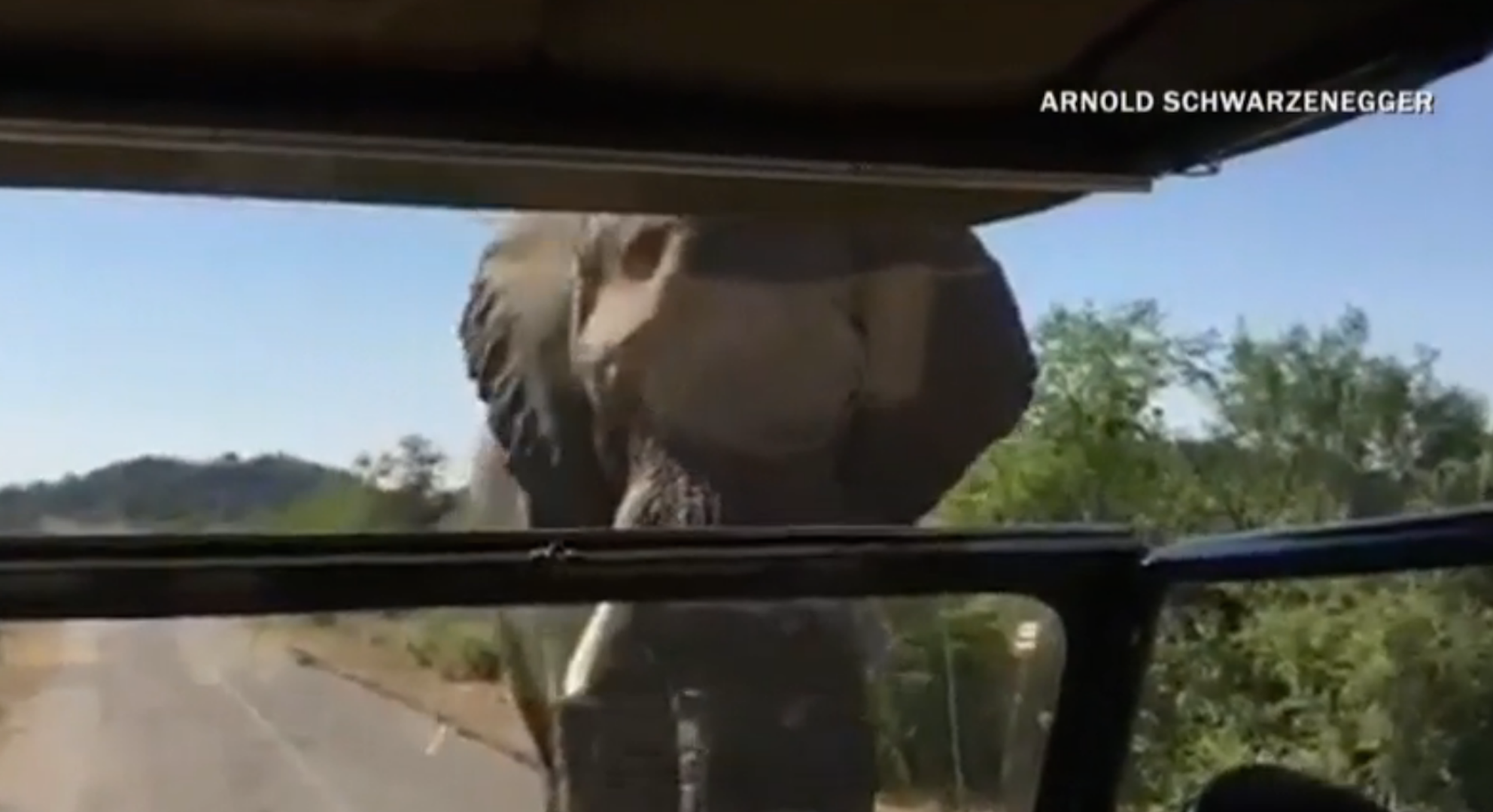 Video of elephant chasing Arnold Schwarzenegger will get your blood pumping